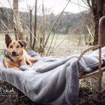 FotoShooting Haustier